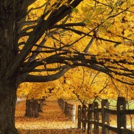 sps autumn